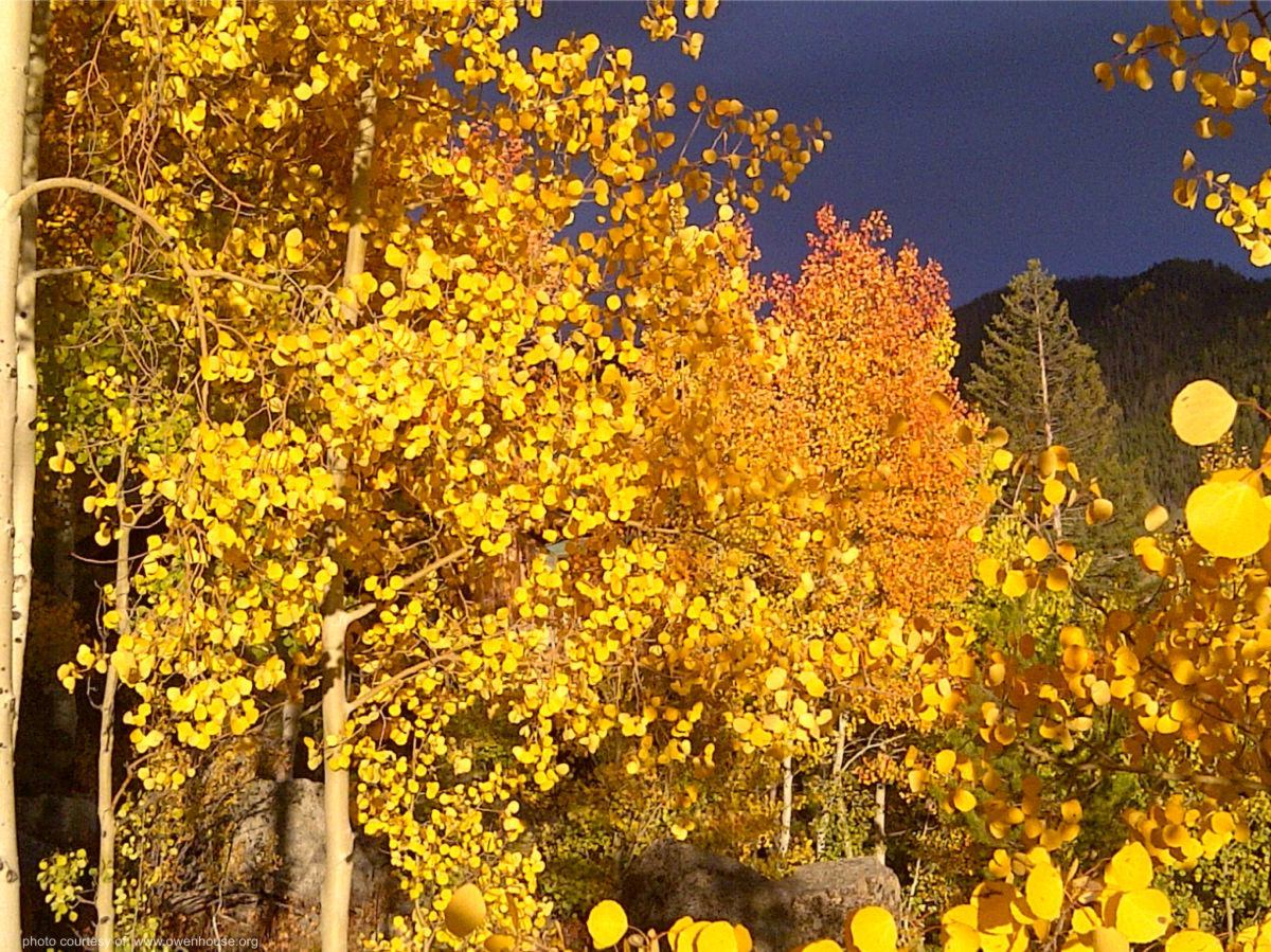 Slide 17 - Picture of the aspen trees as they change beautiful colors during the fall.